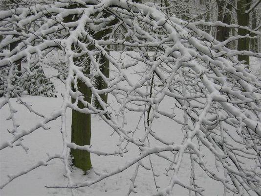Schnee raster