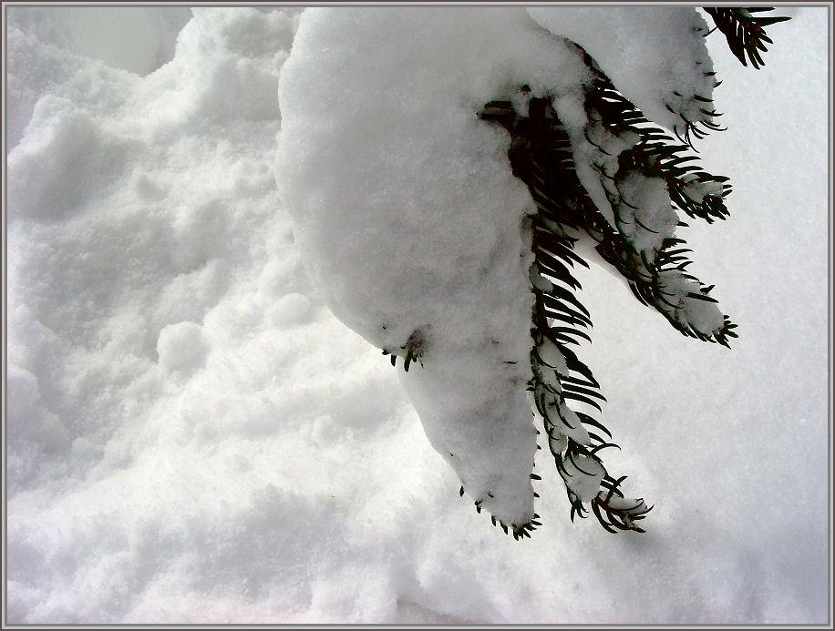 Schnee riecht ....