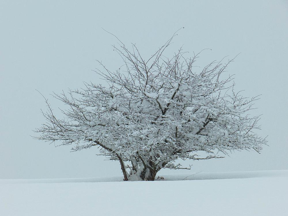 Schnee satt!