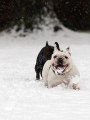 Schnee schmeckt bääääh