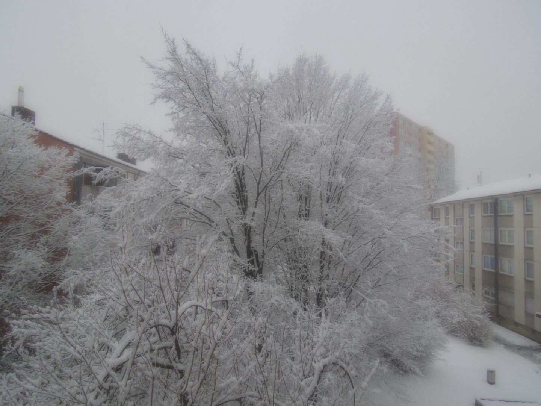 Schnee Schnee