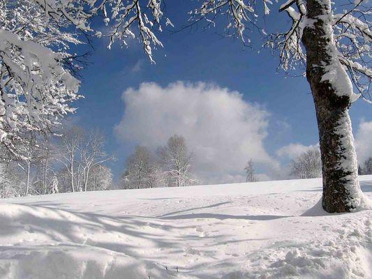 Schnee ... Schnee .. Schnee ..