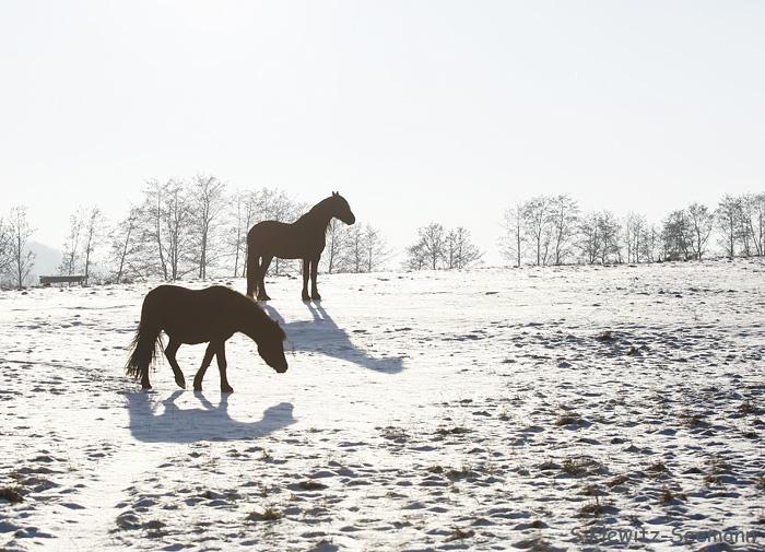 Schnee, Sonne, Friesen...