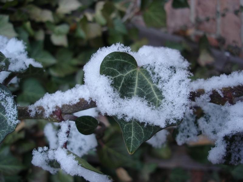 Schnee ummantelt