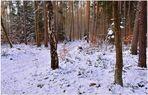 Schnee und Kälte (nieve y frío)