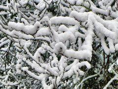 Schnee von Gestern