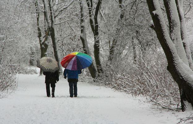 Schnee von gestern / Schirme