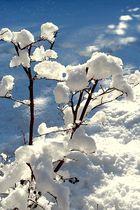 Schnee von gestern...III...