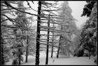 Schnee - Wanderung #1