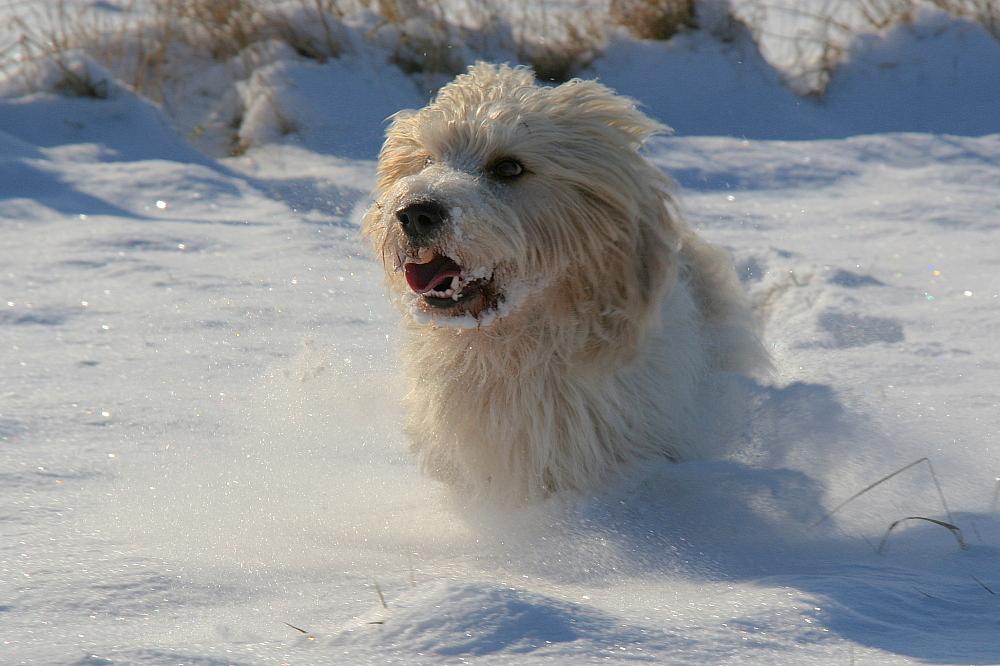 Schnee-Wusel (2)