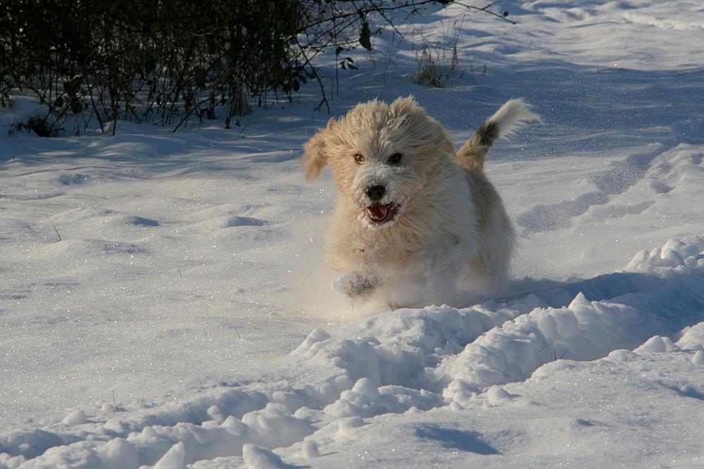 Schnee-Wusel