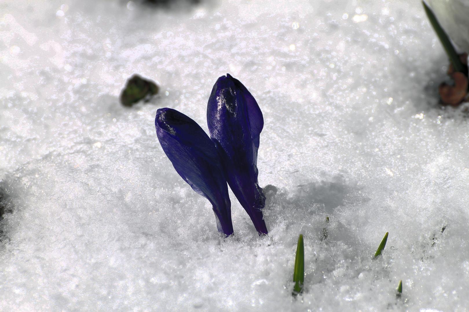 Schnee zu Ostern =)