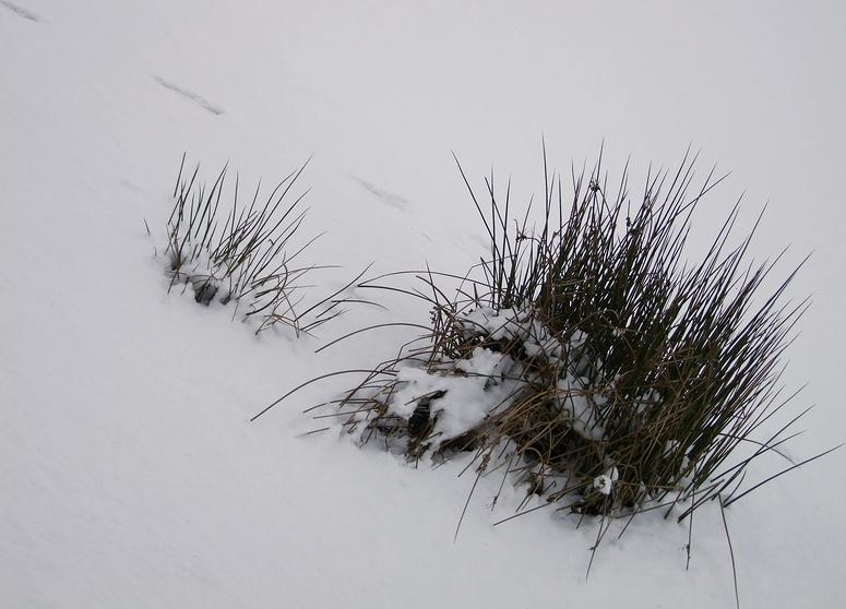 Schnee zum 2ten