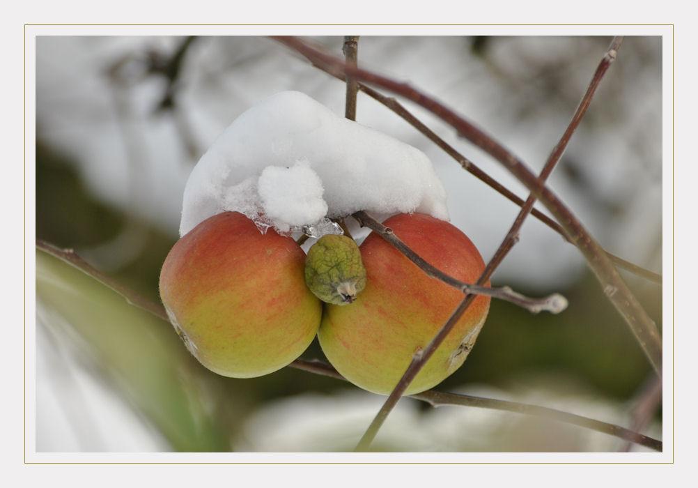 Schneeäpfel