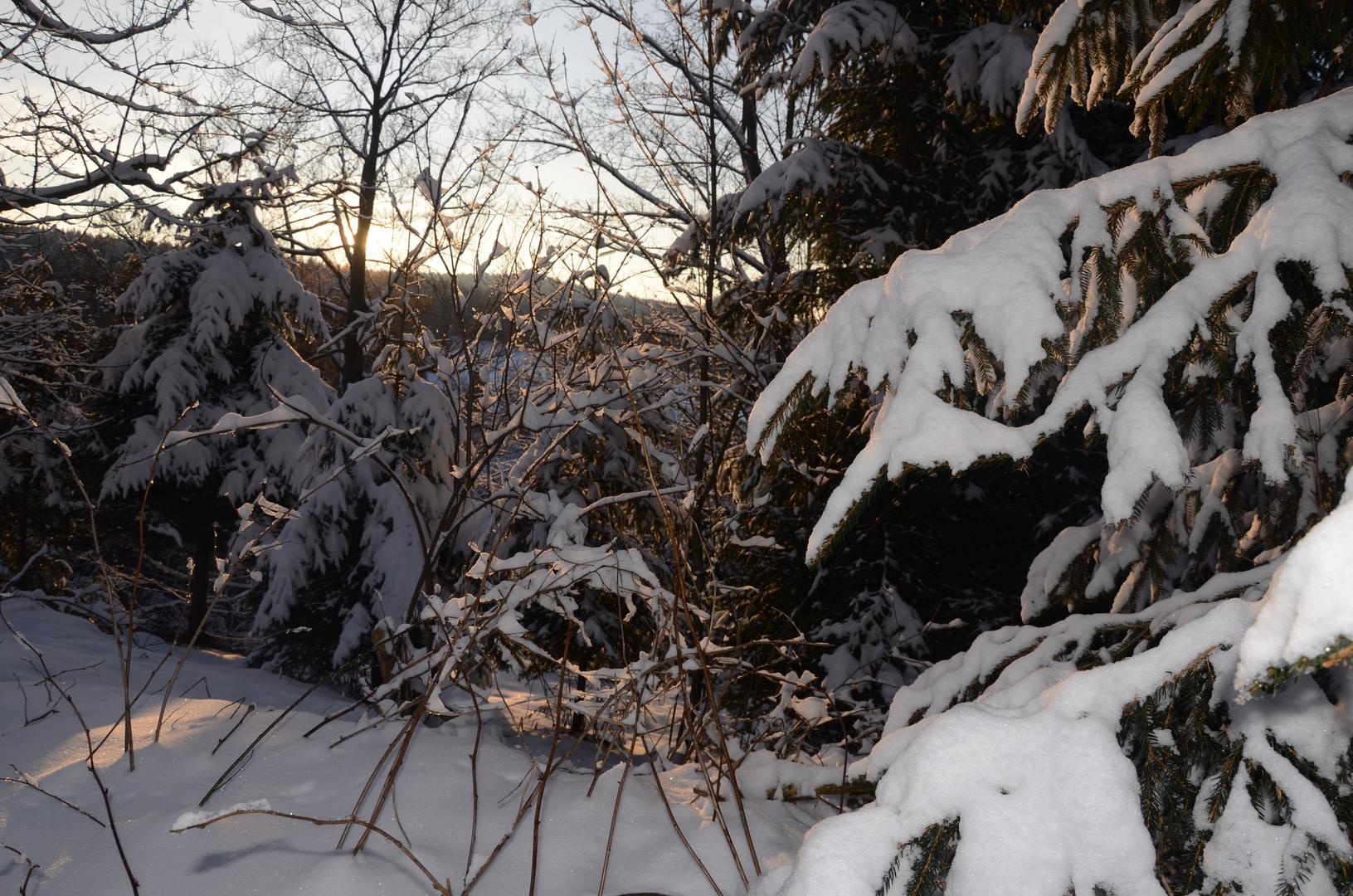 Schneeäste