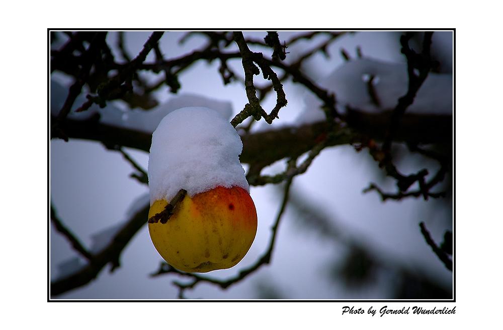 Schneeapfel