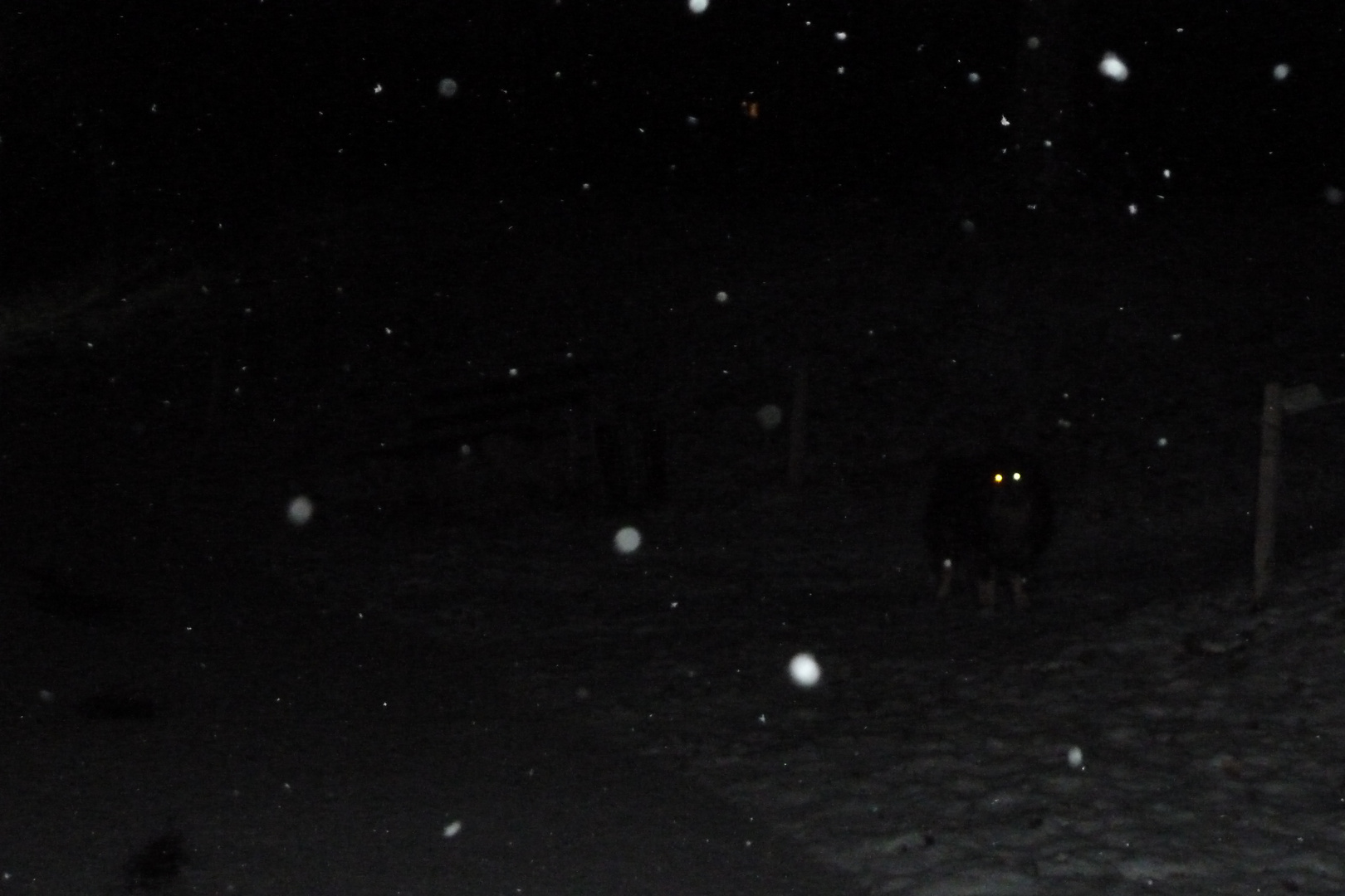Schneeauge