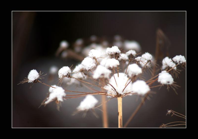 Schneebällchen