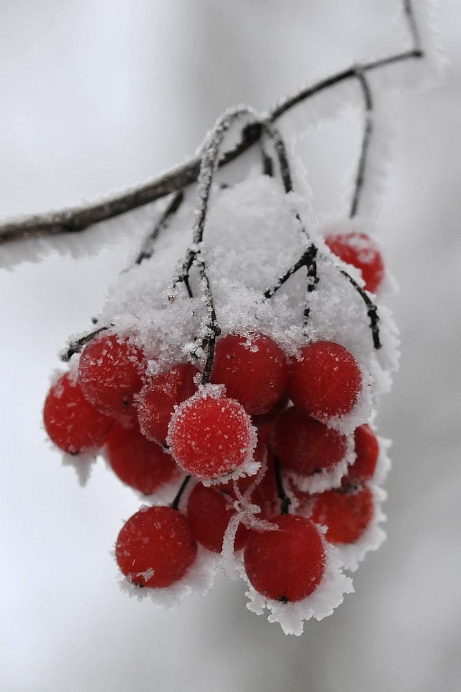 Schneeball im Hochsommer