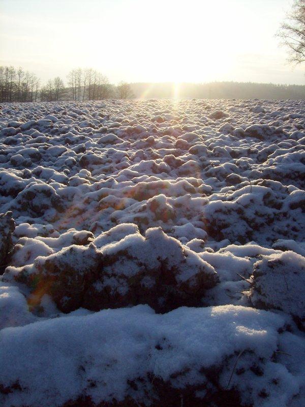 Schneebedeckte Felder