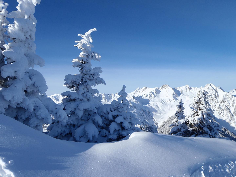 Schneebergtannen