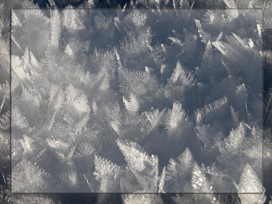 Schneeblätter