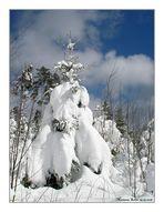 Schnee...blauer Himmel und Sonne....