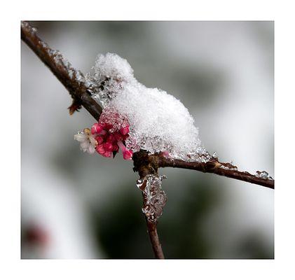 Schneeblumen...