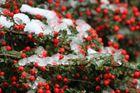 Schneedecke :)