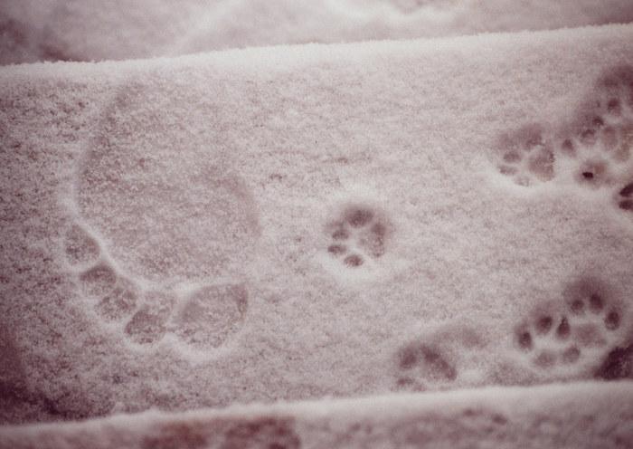 SchneeFährten