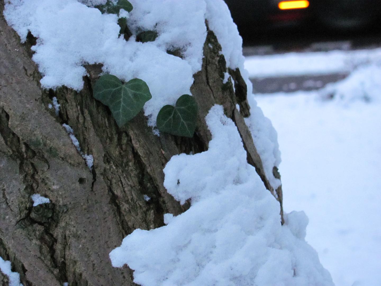 schneefall auf zartem grün