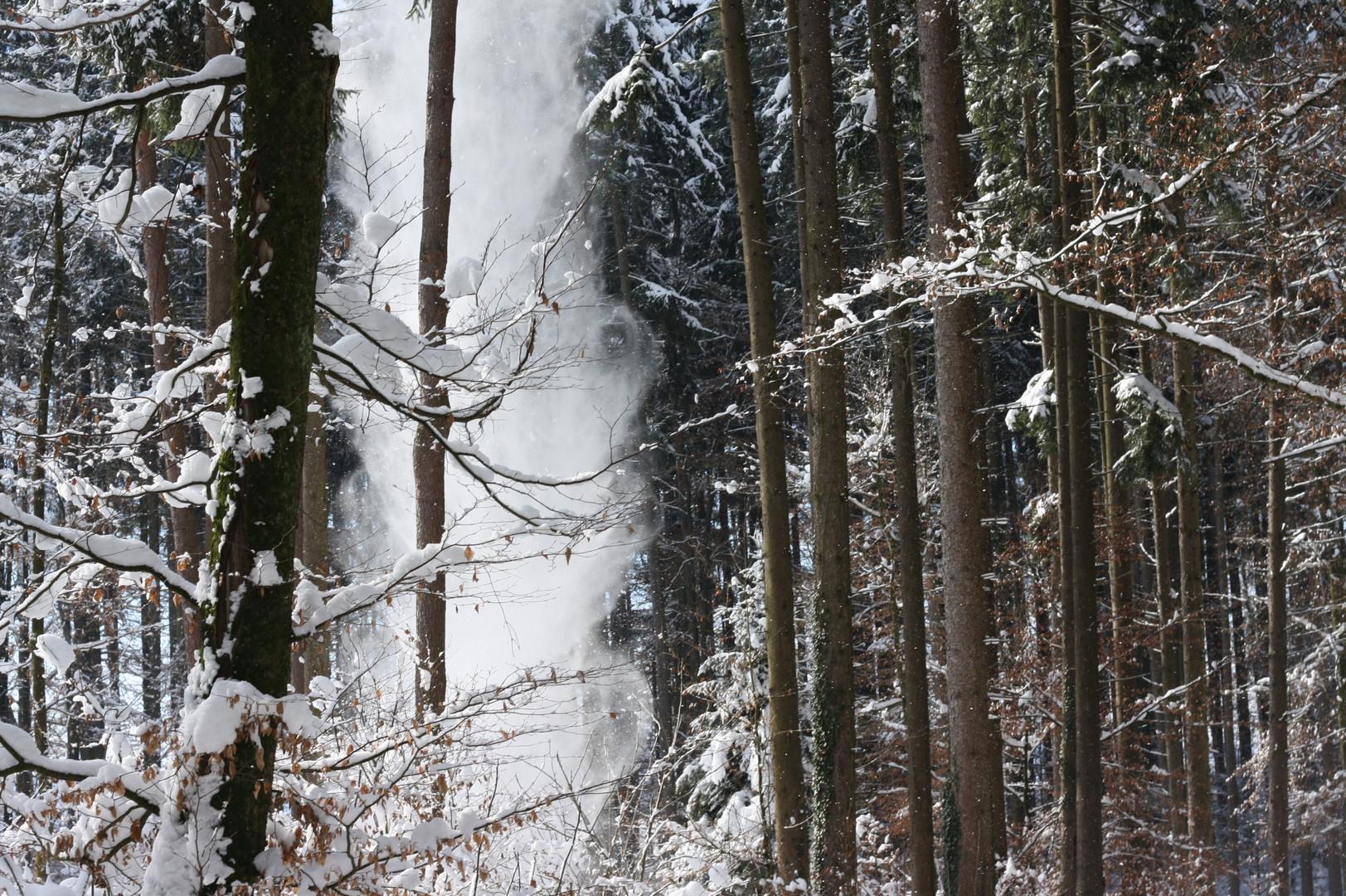 Schneefall im Wald 2