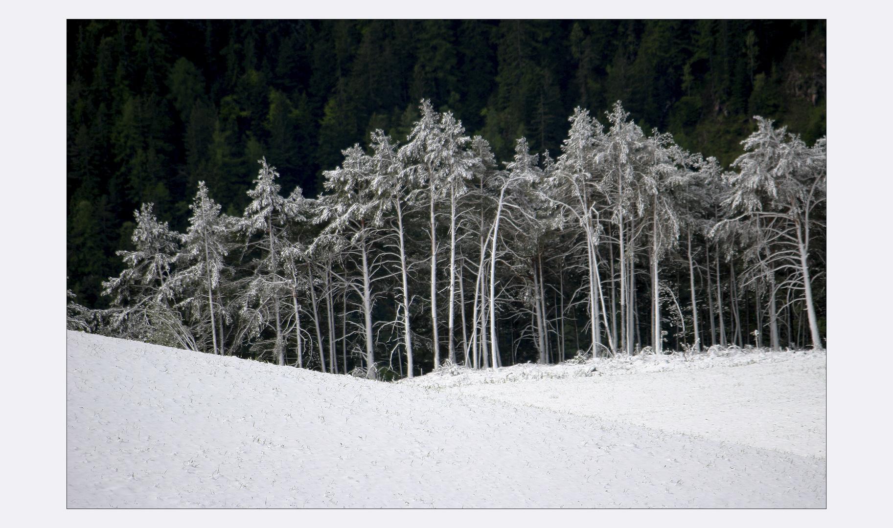 .Schneefallgrenze