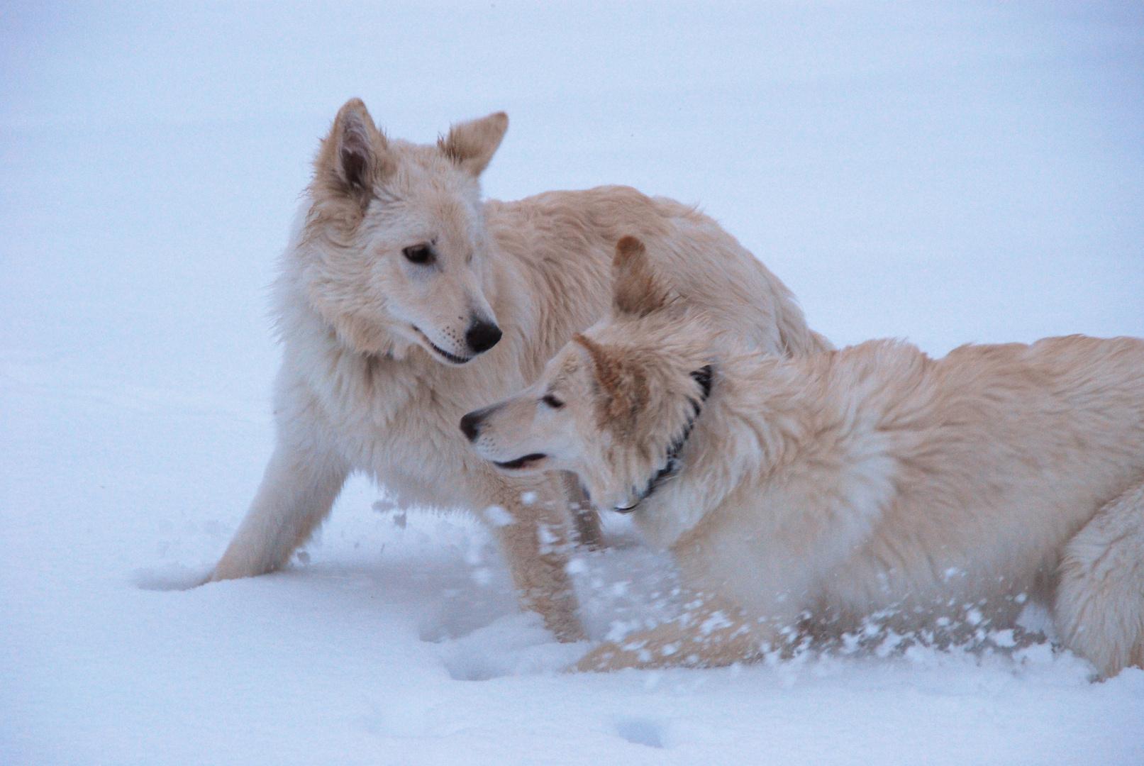 Schneeflocken in Action