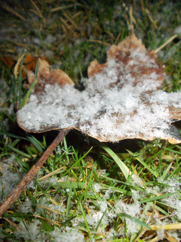 Schneeflockendecke