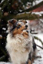Schneeflöckchen (1)
