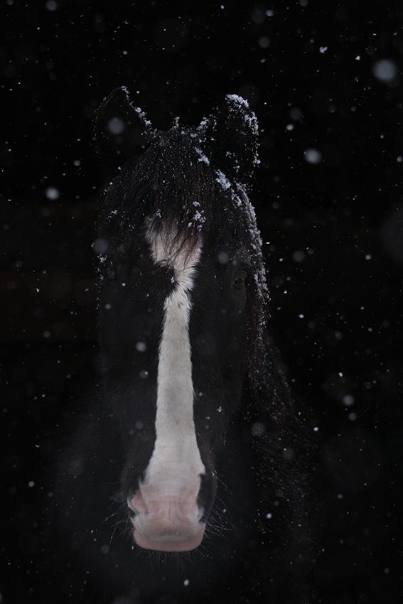 Schneeflöckchen, Weißröckchen, wann bist Du vorbei...