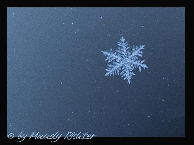 Schneeflöckchen Weißröckchen wann kommst du geschneit?