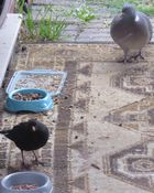 schneefreie Zone - Futter zusammen für Katz+Vogel...