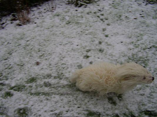 Schneefreude