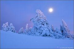 Schneegeister im Mondlicht