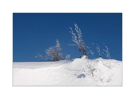 Schneegestrypp