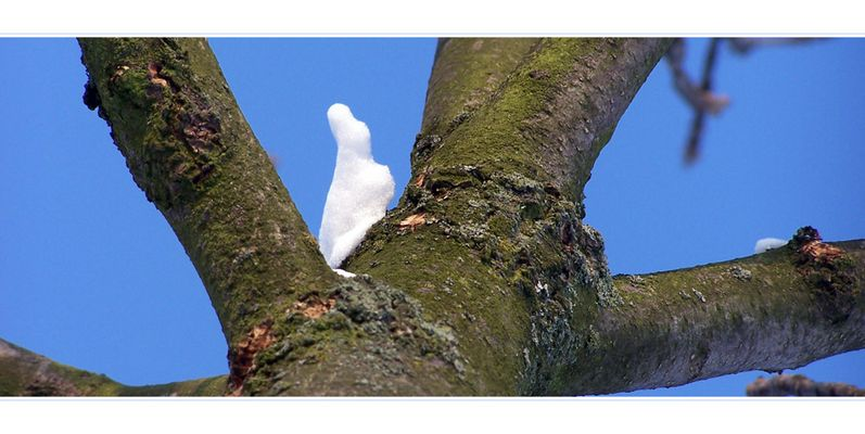 Schneehase auf dem Baum