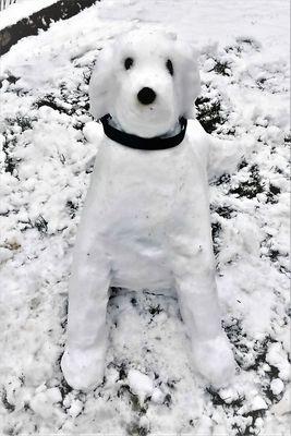 * Schneehund *