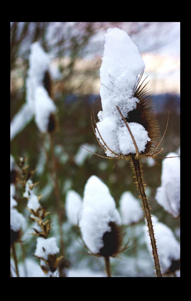 Schneehut