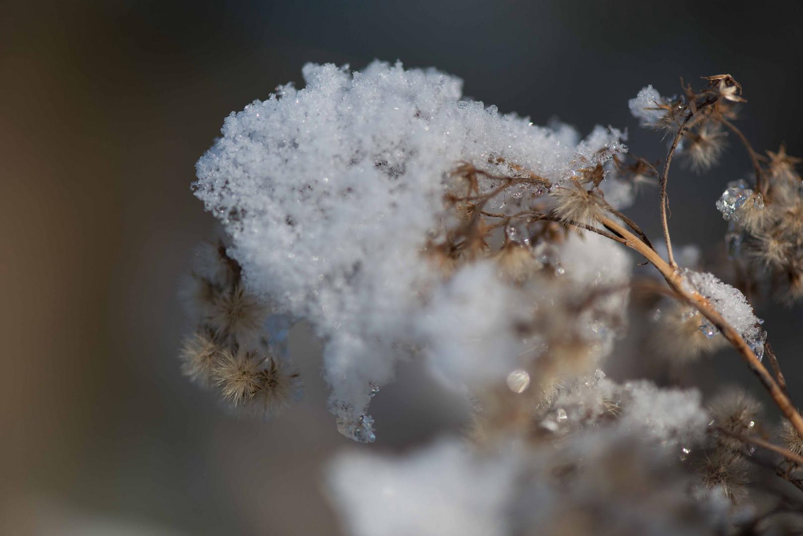 Schneehut II