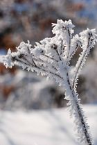 Schneekristalle