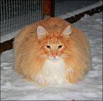 ***Schneekugel***