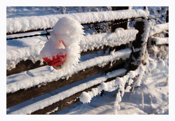 Schneekunst am Weidezaun