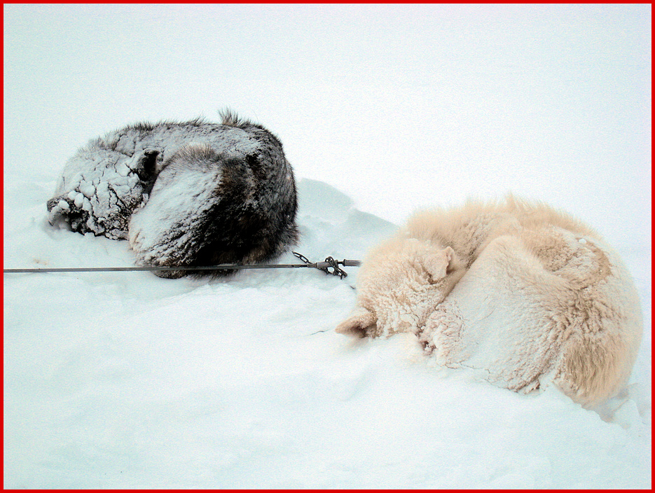 Schneelager Svalbard Part 3